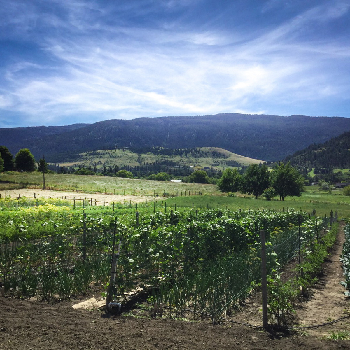Farmer in the Okanagan